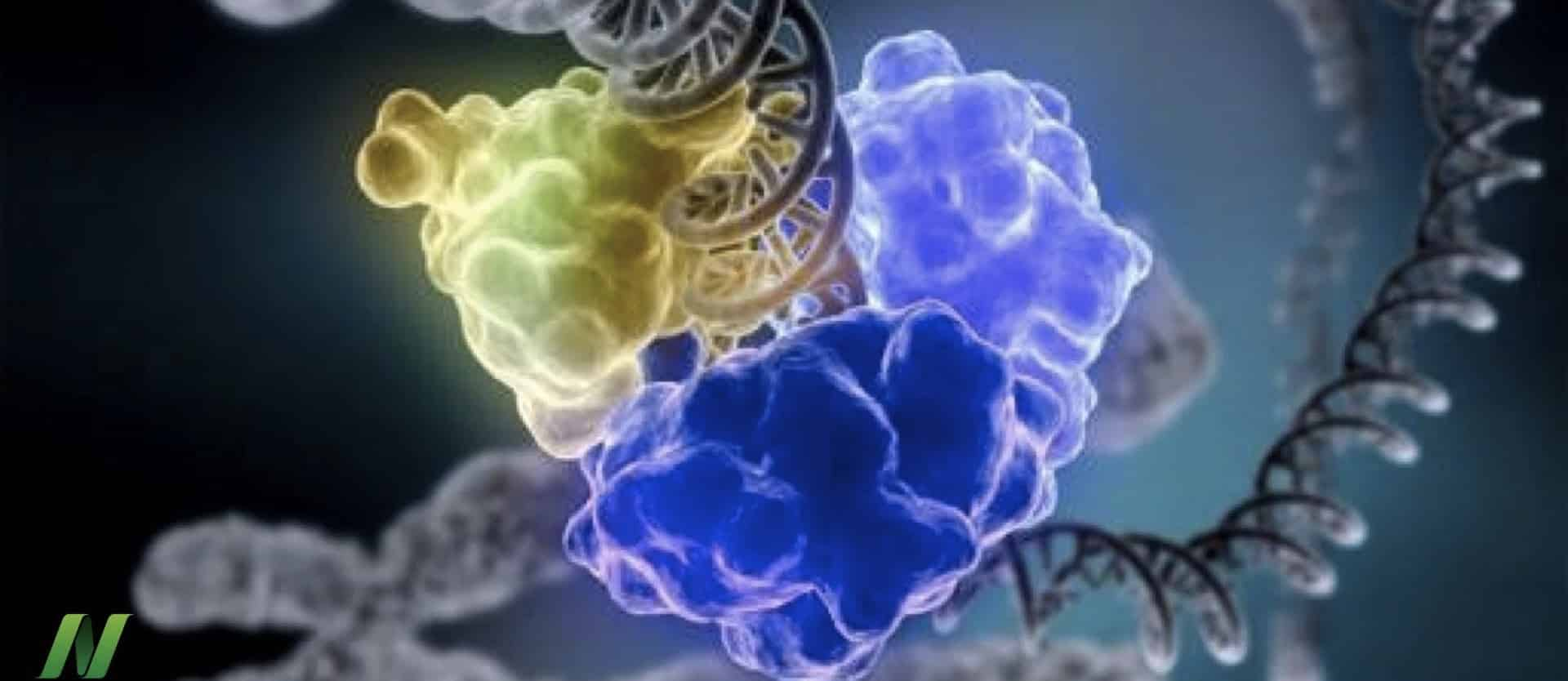 Repairing DNA Damage