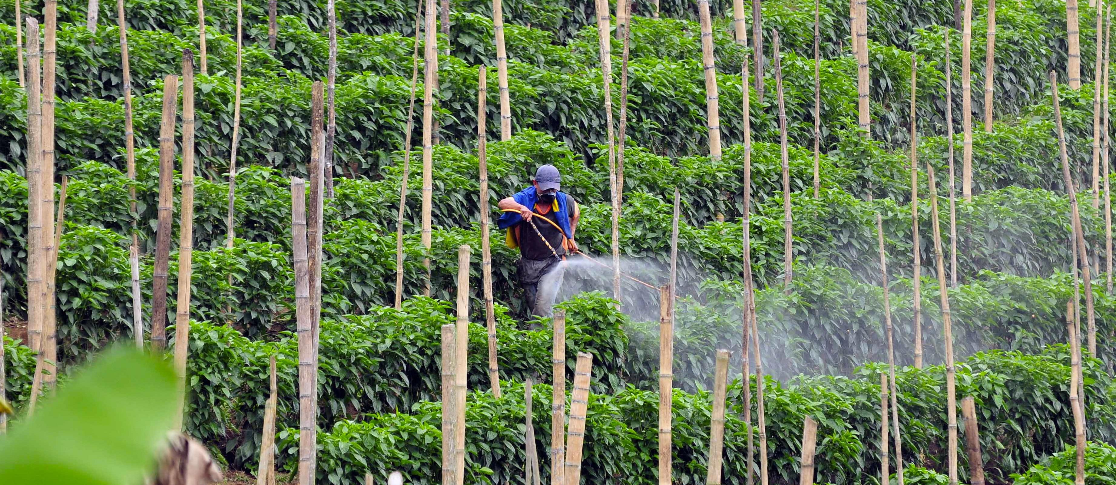 Plants vs. Pesticides