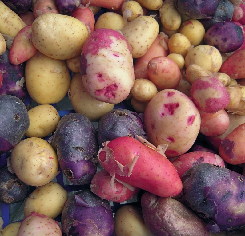 The Verdict on gold, red, & purple potatoes