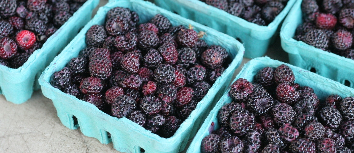 Black Raspberries May Help Prevent Cancer