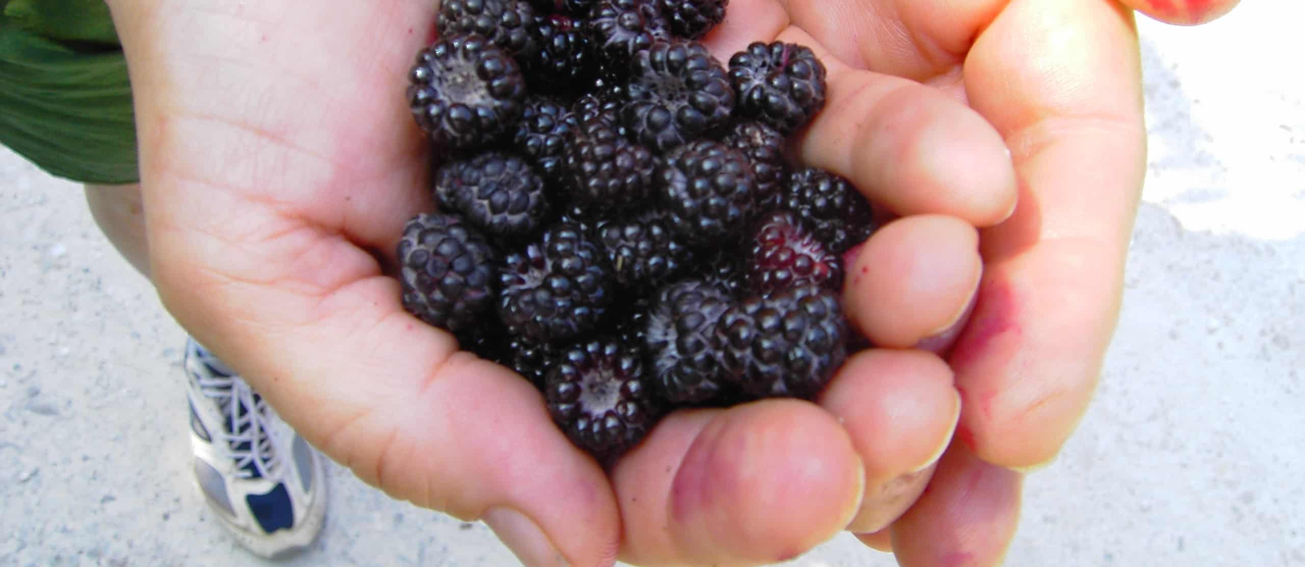 Reducing Muscle Soreness with Berries