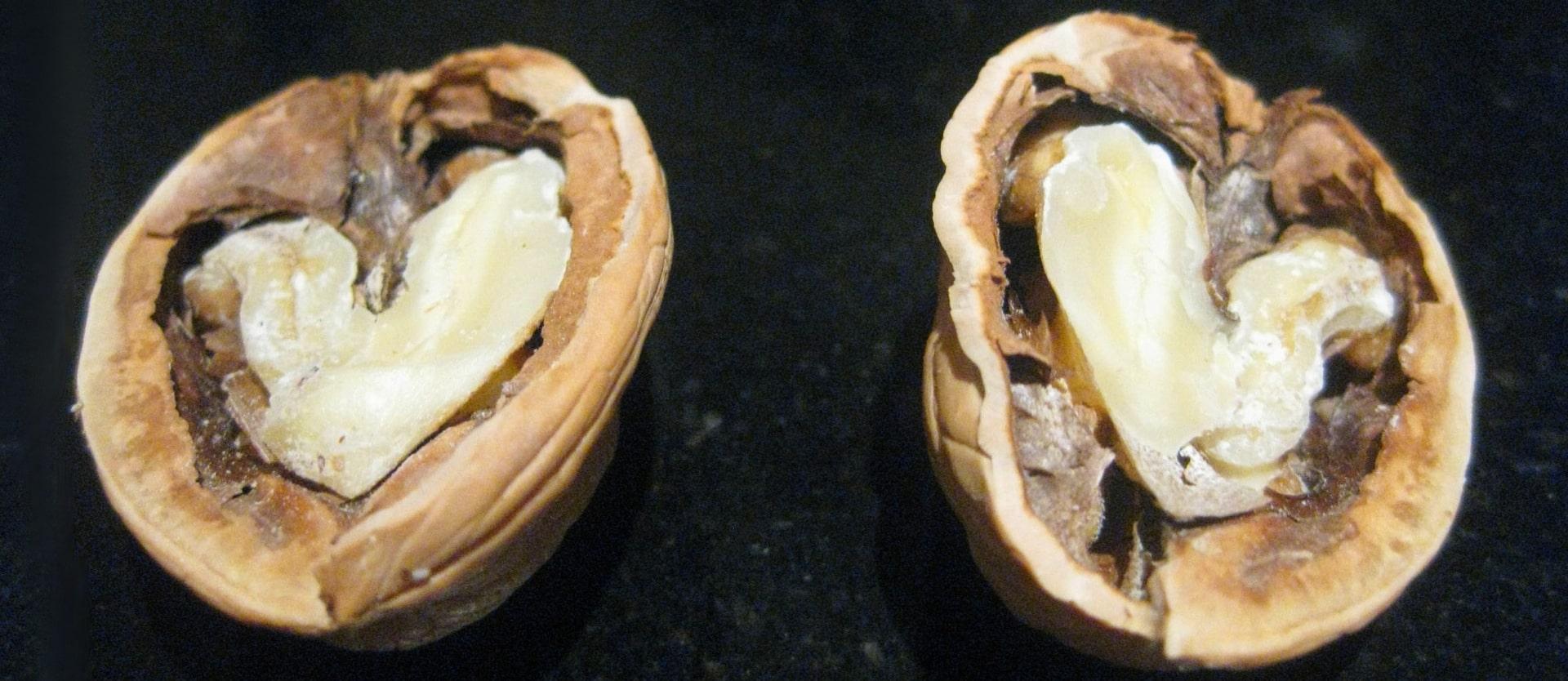 Walnuts and Arterial Funciton