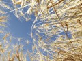 Gluten-Free Diets- Separating the Wheat from the Chat