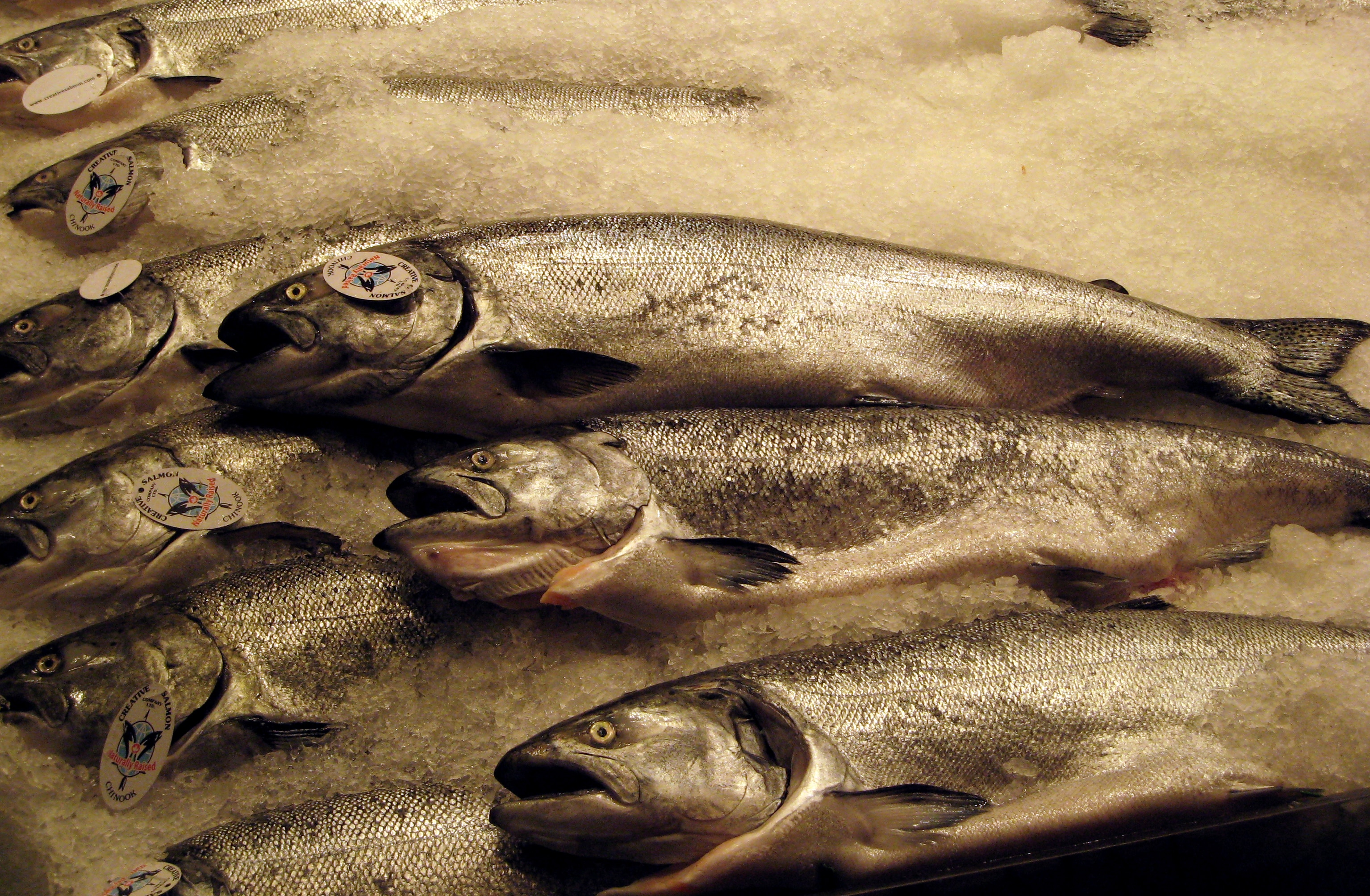 Pollutants in Salmon and Our Own Fat