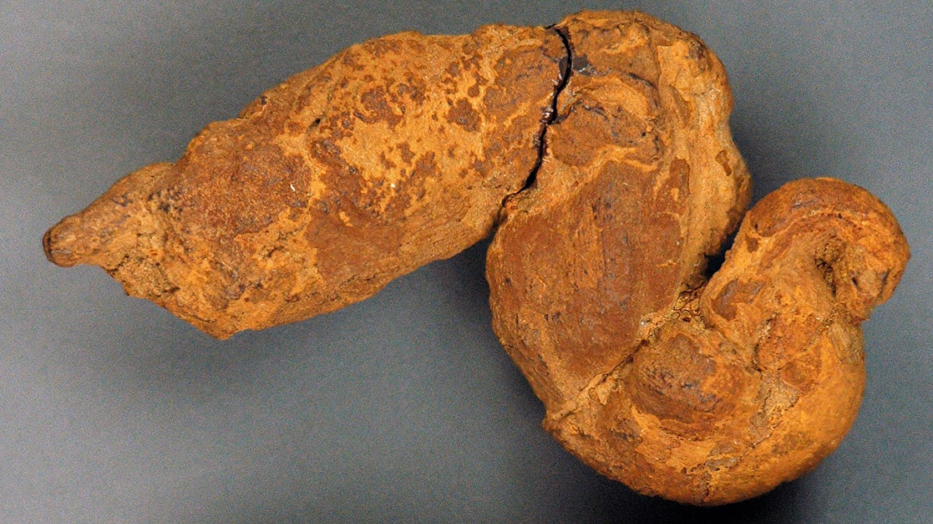 Paleopoo: What We Can Learn from Fossilized Feces