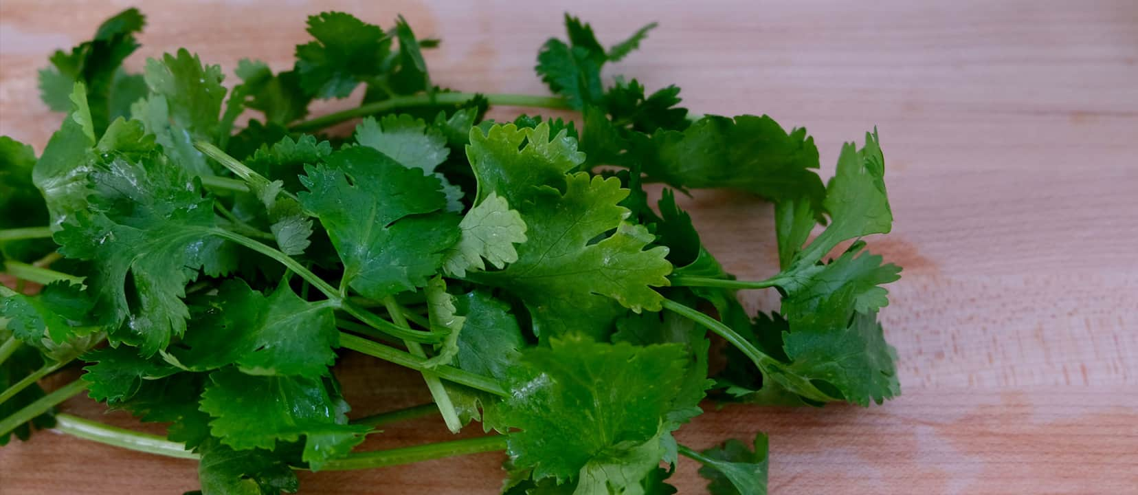 Why Some Like Cilantro and Others Hate It