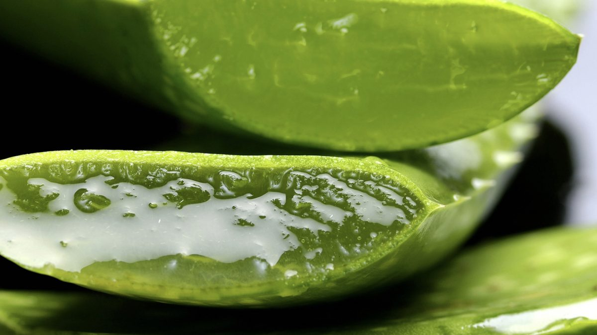 Is Aloe Effective for Blood Pressure, Inflammatory Bowel, Wound Healing and Burns?