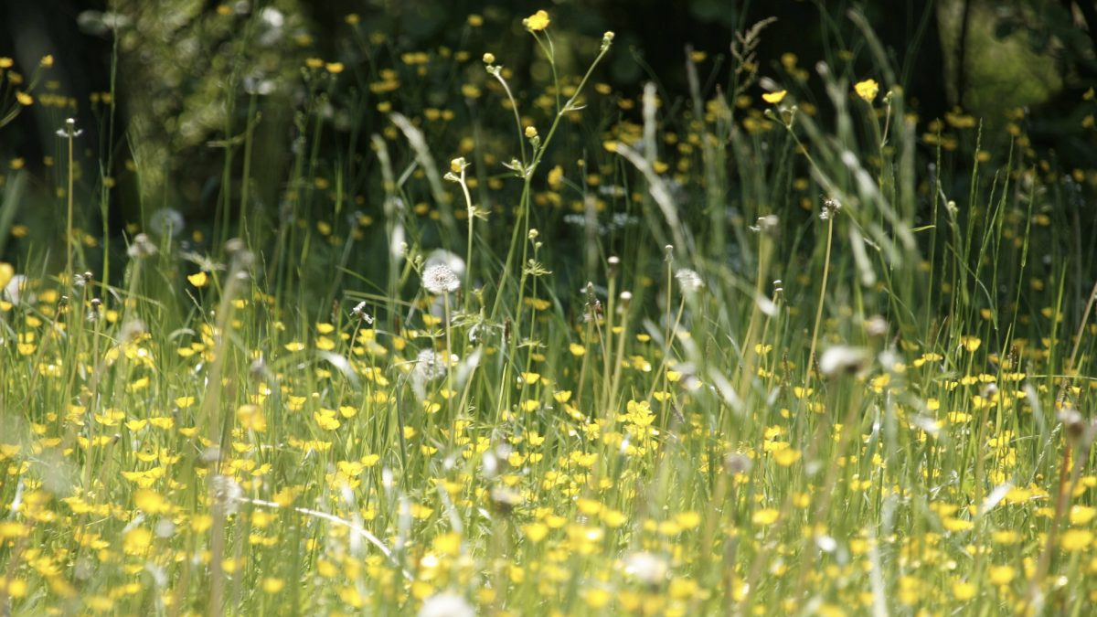 Best Food for Hay Fever (Seasonal Allergies)
