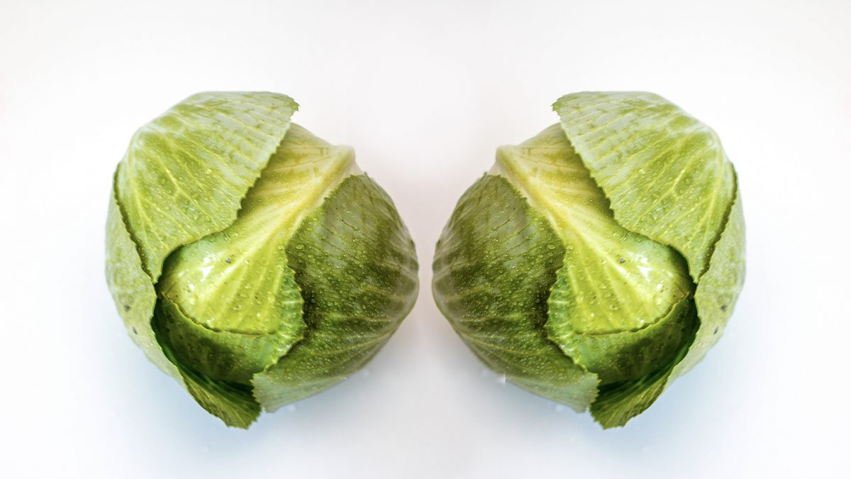 Benefits of Cabbage Leaves for Relief of Engorged Breasts