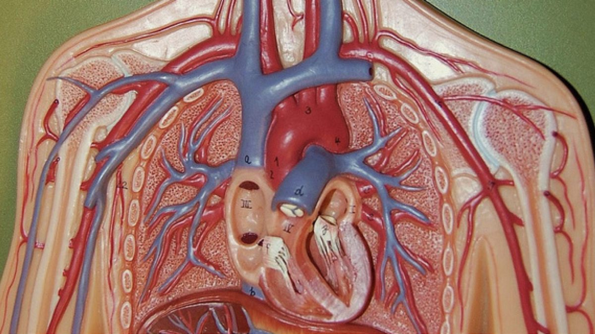 how to improve artery function nutritionfacts org