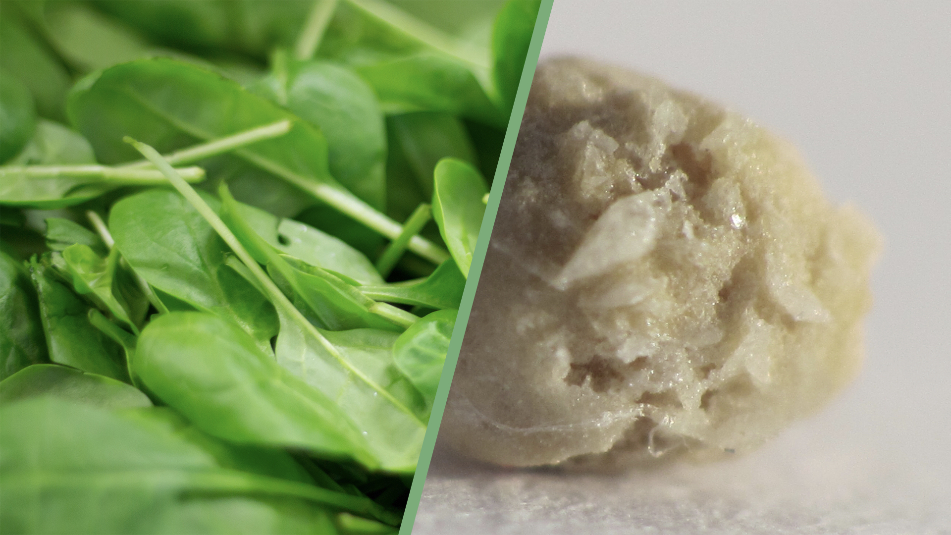 Oxalates in Spinach and Kidney Stones Should We Be Concerned?