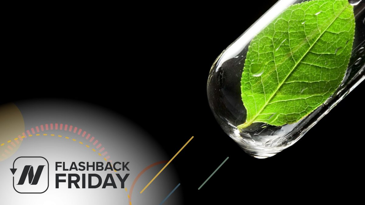 FBF - Green Smoothies- what does the science say