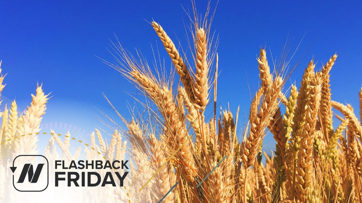 FBF - Is Gluten Sensitivity Real and Gluten-Free Diets- Separating the Wheat from the Chat