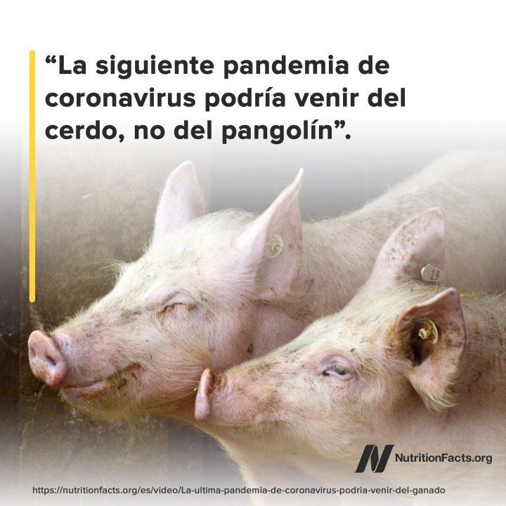 Del cerdo