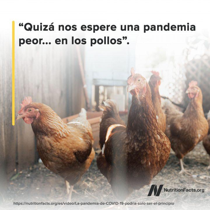 Los Pollos