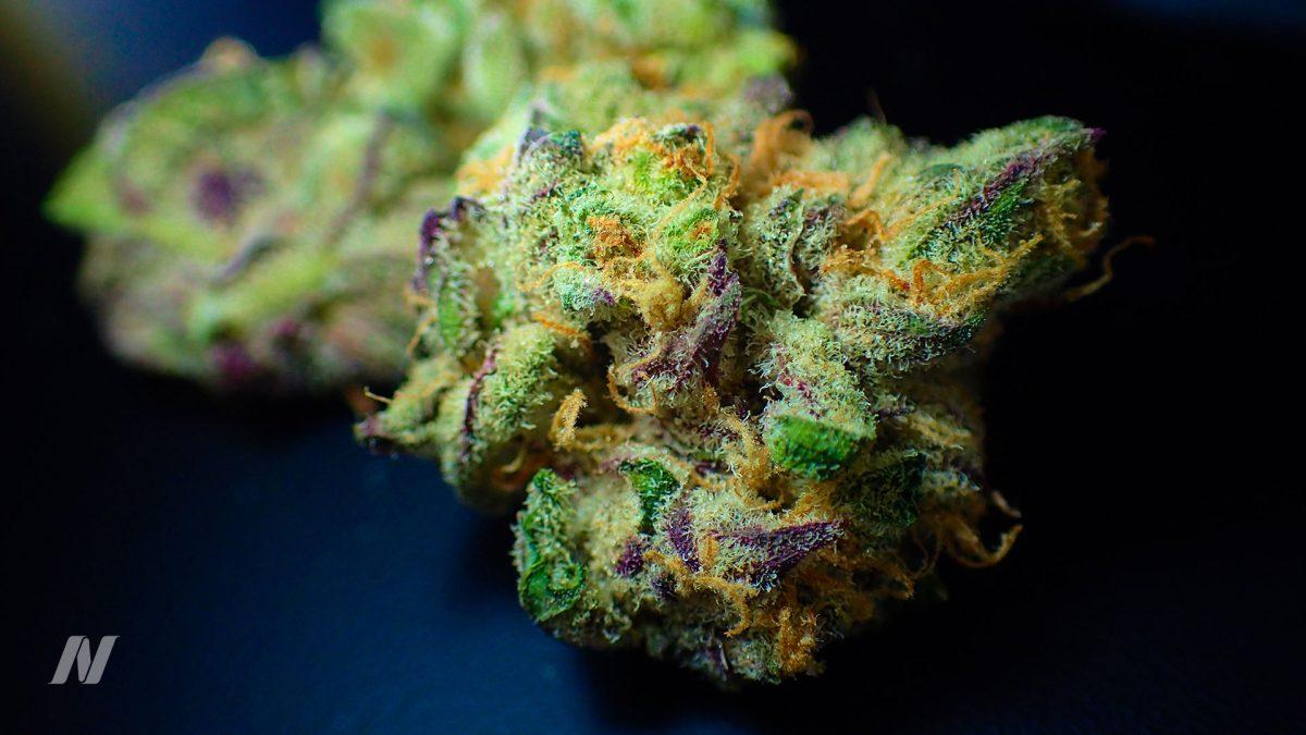 52-03-Does-Marijuana-Cause-Strokes-and-Heart-Attacks