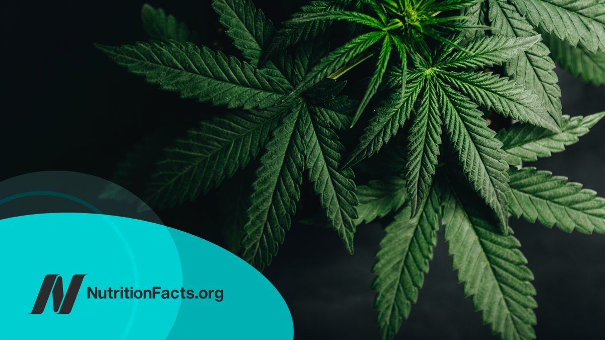 Cannabis for IBD (Inflammatory Bowel Disease)